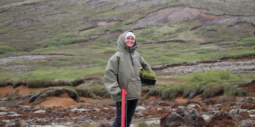 Volunteer planting saplings in Iceland