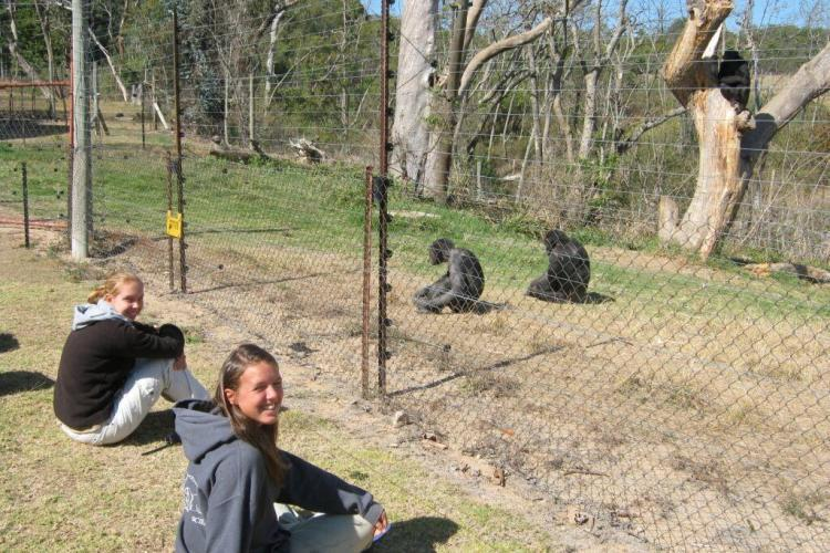 Volunteers at Chimpanzee sanctuary in South Africa