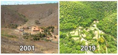 Reforestation before and after photo