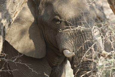 alttagDesert Elephant Conservation   WorkingAbroad