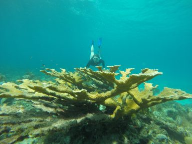 Volunteer with coral in Cuba Cuba Conservation Volunteer | Working Abroad