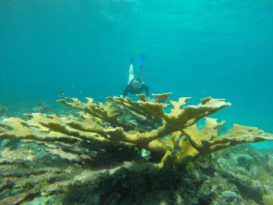 alttagCuba Conservation Volunteer | Working Abroad
