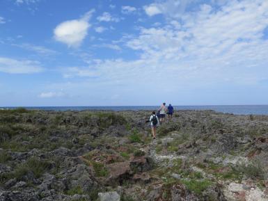 Volunteers coastal cleanup