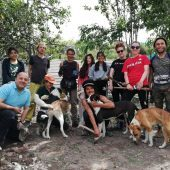 Volunteer at a rescue centre for stray dogs in the Sacred Valley of the Incas, Peru