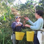 Agriculture and Beekeeping Volunteer in Colombia