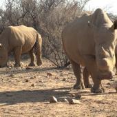 Rhino Rangers Anti-Poaching Programme, Namibia
