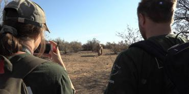 Rhino research volunteering in Namibia