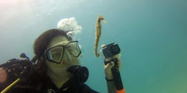 Volunteer Diving with seahorse in Mauritius