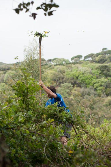 Volunteer clearing vegetation in Portugal