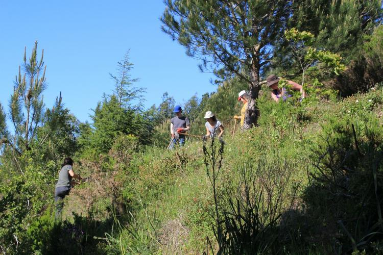 Volunteers working in forest in Portugal