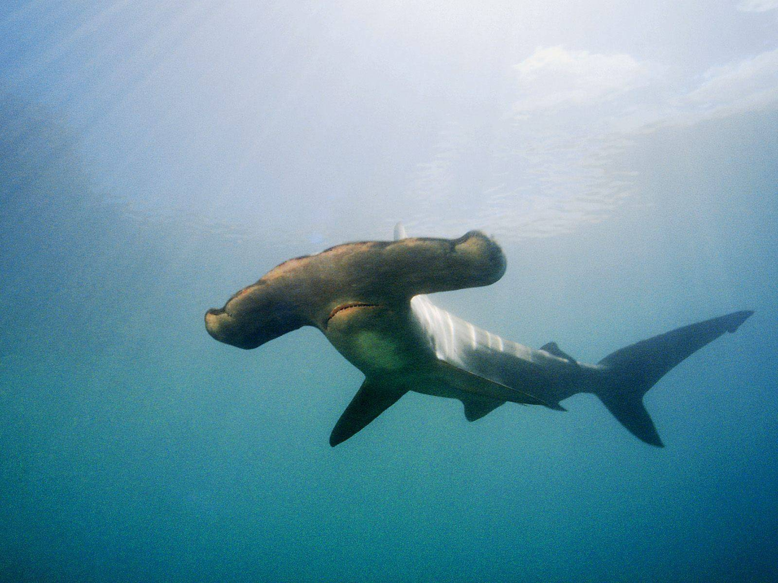 alttagCoral Reef Conservation Australia   WorkingAbroad