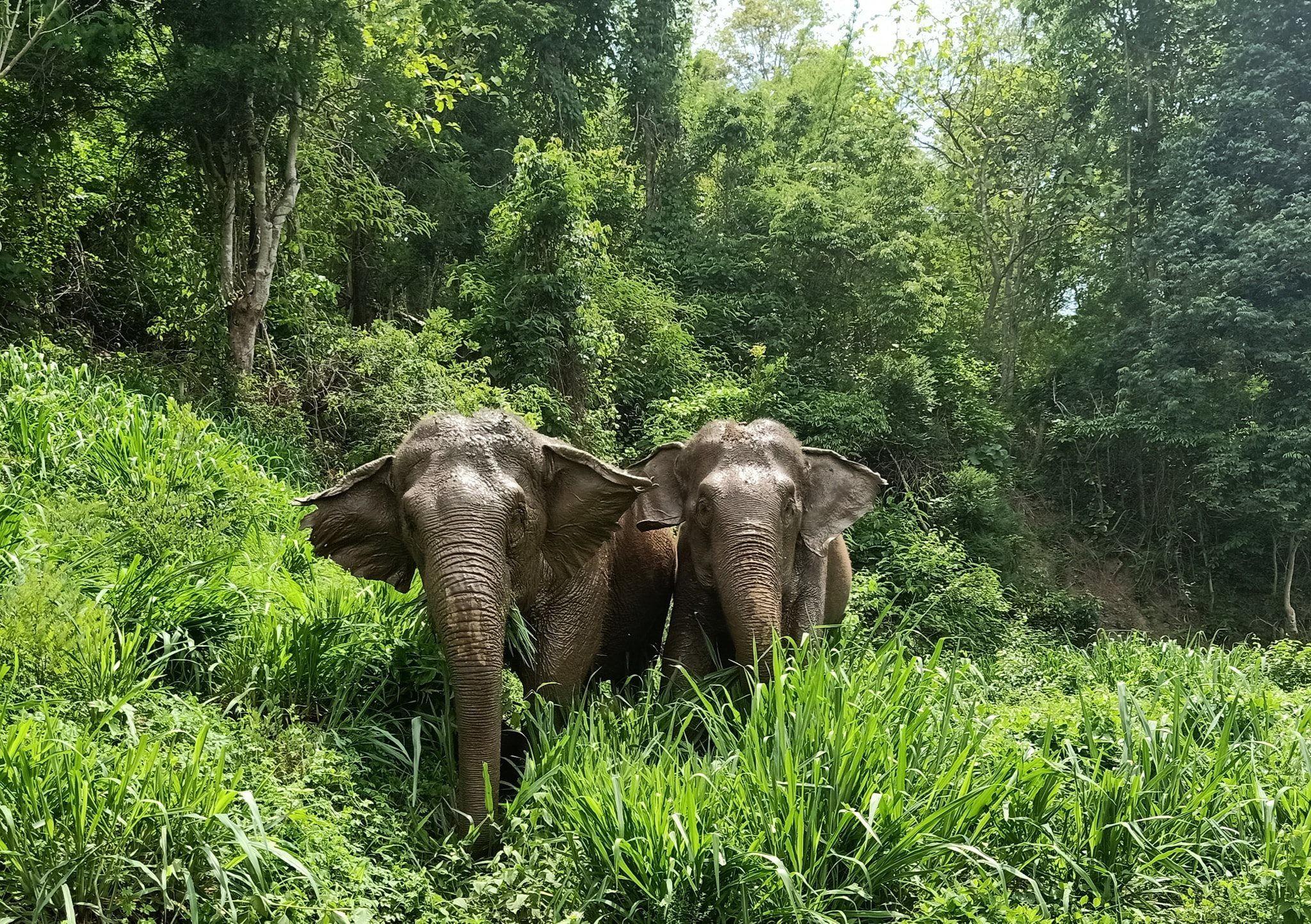 alttagVolunteer with Elephants   Volunteer Thailand   Working Abroad