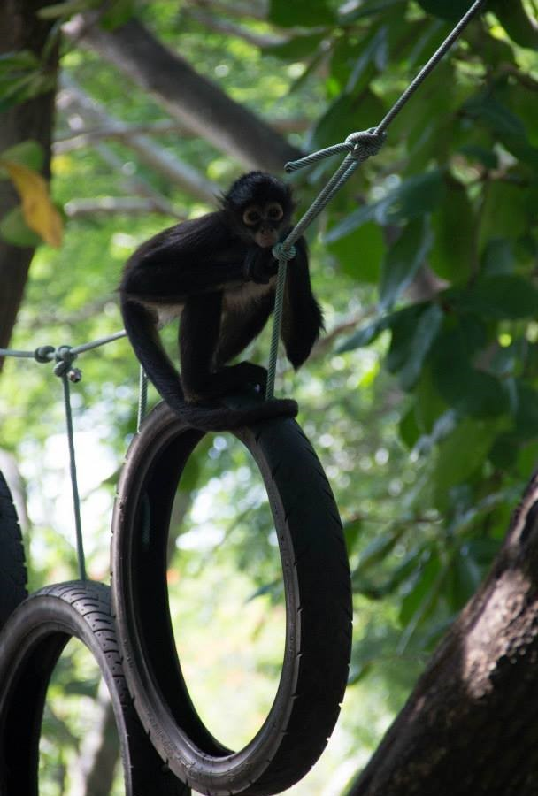 alttagVolunteer Monkeys | WorkingAbroad