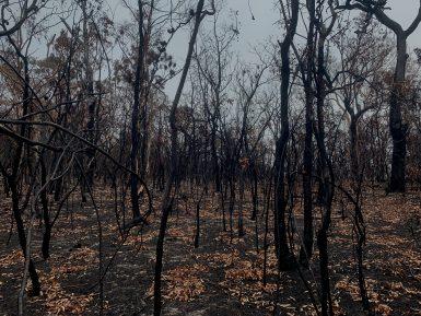 alttagYengonationalpark20192020bushfires