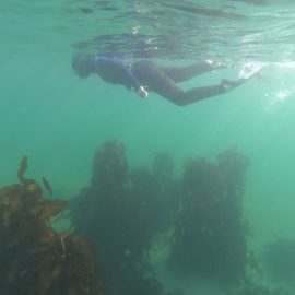 Madison swims in sea forest