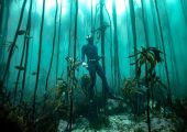 The Great African Sea-Forest Marine Volunteer Programme, South Africa