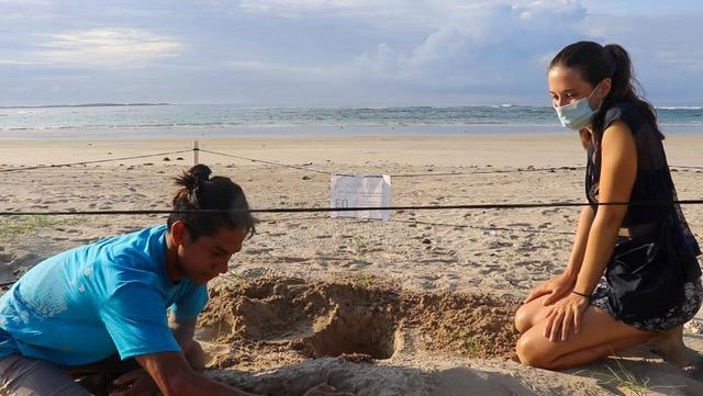 Volunteering with sea turtles, Galapagos