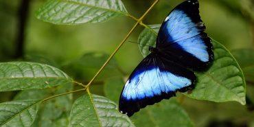 Wildlife and Biodiversity Facts