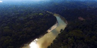 Rainforest Conservation Strategies