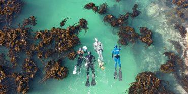 Marine Conservation Strategies