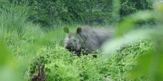 Rhino Nepal