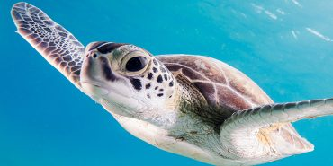 Turtles & Reptiles